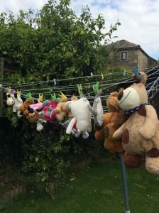 teddy festival 1